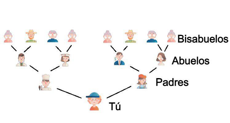 Línea sucesoria de familiares